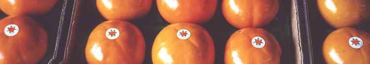 Welcome to The Australian Persimmon Export Company